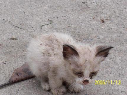Tributo a Perros y Gatos abandonados